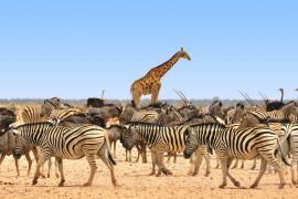 animals_africa
