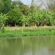 Royal Cities, Klassisches Nordthailand, Thailand, landestypisch, Natur, Landschaft, Thai, Reis, Landwirtschaft, Fluss, Wasser, Urwald, Tradition, traditionell, Mensch