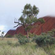 Australien, Outback, Uluru, Ayers Rock, Bäume, Längsansicht, Wolken, Gras