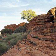 Australien, Outback, Büsche, Kings Canyon
