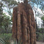 Australien, Darwin, Litchfield National Park, Termitenhügel, Termiten
