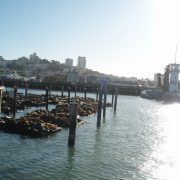 Pier 39, San Francisco, Kalifornien, USA