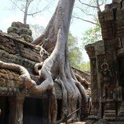 Ta Prohm, Kambodscha