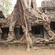 Tempel Kambodscha, Asien, Reise, Rundreise, Urwald, Erlebnisreise