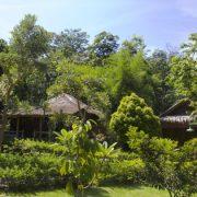 Indonesien, Bali, Orang-Utan, Dschungel. Trekking, Abenteuer, Asien, Sumatra, Übernachten im Dschungel