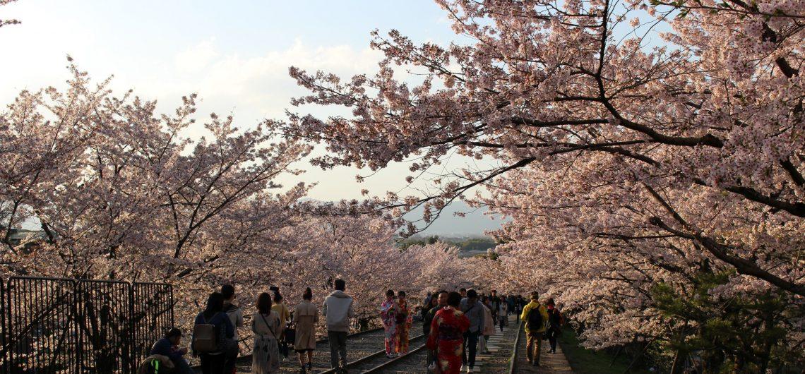 Japan, Kirschblüte, Kyoto