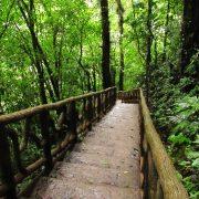 Costa Rica Reise, Rundreise, Abenteuer, Erlebnisreise, kleine Gruppen, Regenwald, Artenreichtum, Naturvielfalt, Mittelamerika