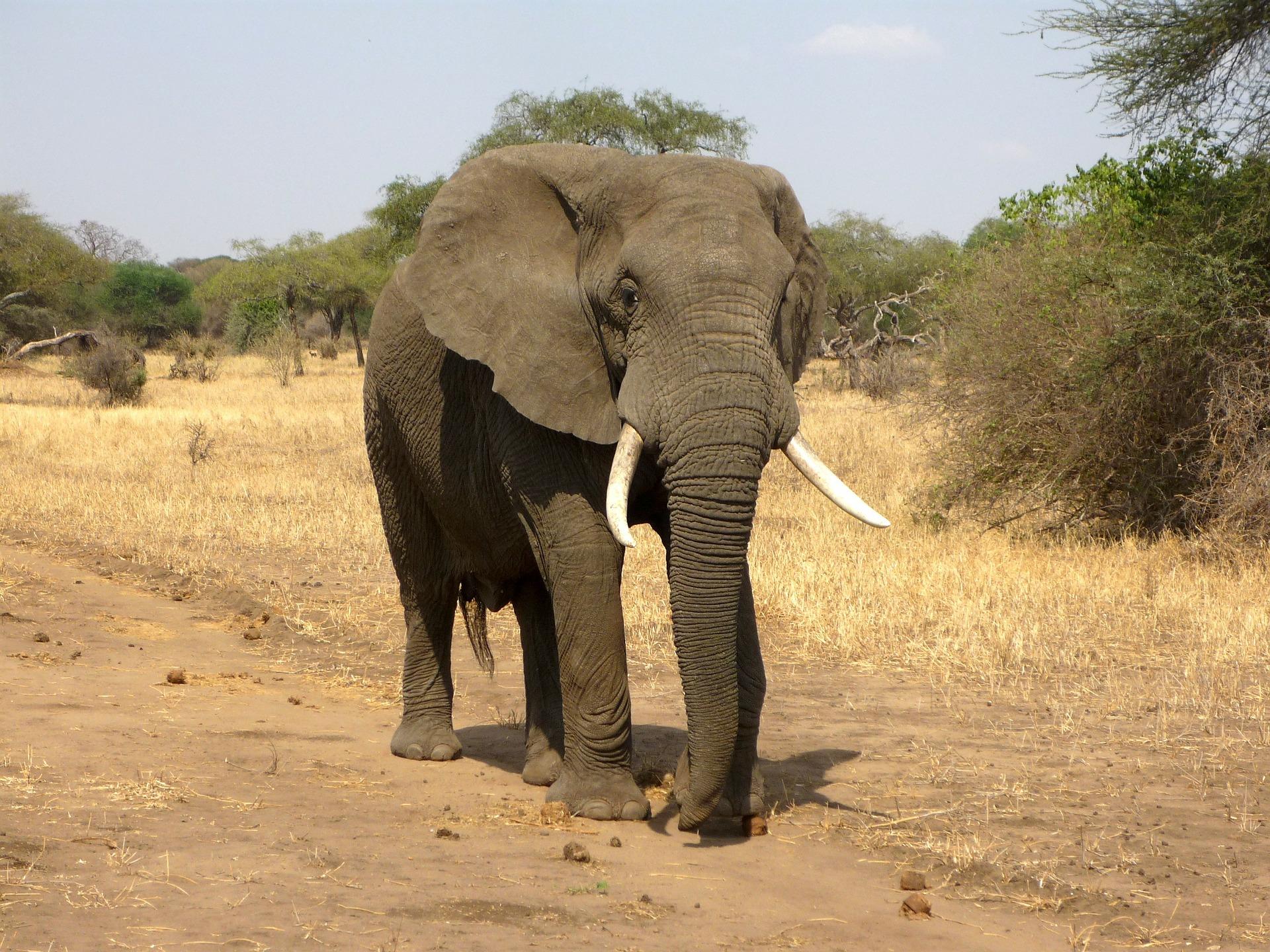 namibia-elefant