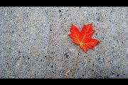 Ahornblatt, Kanada, Indian Summer, Herbst