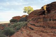 Australien, Outback, Büsche, Kings Canyon