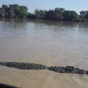 Australien, Darwin, Litchfield National Park, Krokodil, Fluss, Wasser