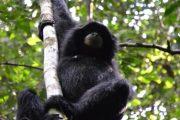 Indonesien, Bali, Orang-Utan, Dschungel. Trekking, Abenteuer, Asien, Sumatra, Tierbeobachtung, Affe, Orang-Utan
