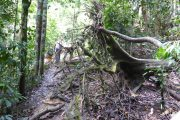 Dschungel, Trekking, Sumatra, Gunung Leuser, Thomas Leave, Affe, Orang Utan, Natur, freilebend, wild, Abenteuer, Individualreisen, on the rocks, Kleingruppe, Regenwald, Tiere, Bukit Lawang, Indonesien, Bali, anderes reisen