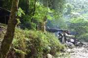 Dschungel, Trekking, Camping, Sumatra, Gunung Leuser, Thomas Leave, Affe, Orang Utan, Natur, freilebend, wild, Abenteuer, Individualreisen, on the rocks, Kleingruppe, Regenwald, Tiere, Bukit Lawang, Indonesien, Bali, anderes reisen