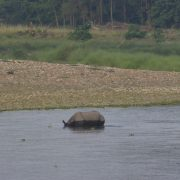 Nepal, Chitwan Nationalpark, Natur, Safari, Nashorn, Wildpark, Individualreise, Rundreise