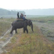 Nepal, Chitwan Nationalpark, Natur, Safari, Nashorn, Wildpark, Individualreise, Rundreise, Elefant