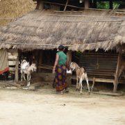 Nepal, Asien, Rundreise, Individualreise, Ochsenkarren, Land und Leute, alternatives Reisen, Chitwan Nationalpark, Reisterassen, Reisfelder, Tiere, Vögel, Safari