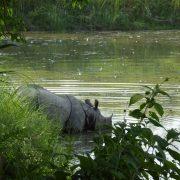 Nepal, Asien, Rundreise, Individualreise, Ochsenkarren, Land und Leute, alternatives Reisen, Chitwan Nationalpark, Reisterassen, Reisfelder, Tiere, Vögel, Safari, Nashörn, Elefant, Tiger, Krokodil