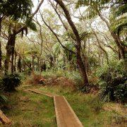 Trekking im Regenwald auf La Réunion