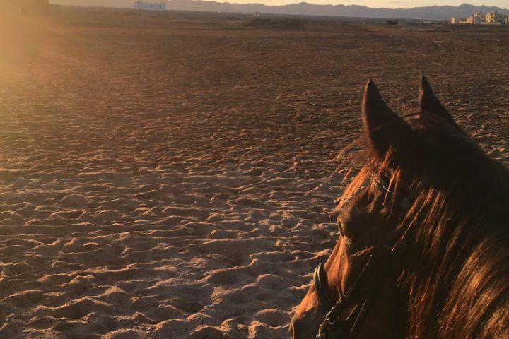 Ausritt in der Wüste